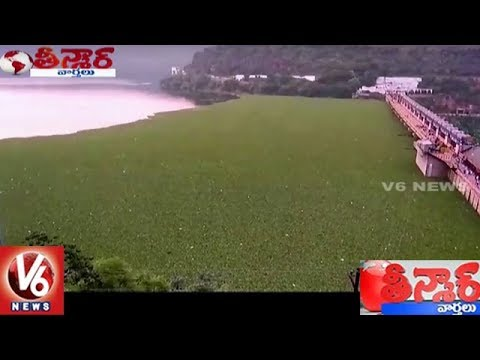Srisailam Dam Water Filled With Horseshoe Weed | Teenmaar News