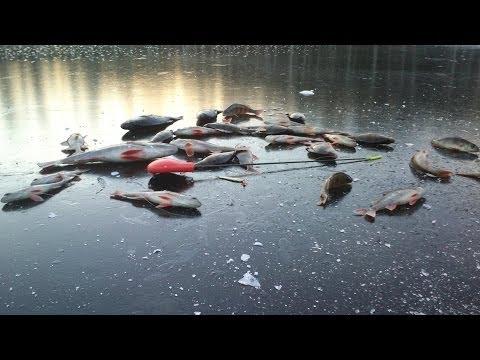 где ловить ротана в новосибирске