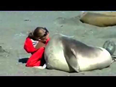 Elephant Seal Falls In Love With A Lady