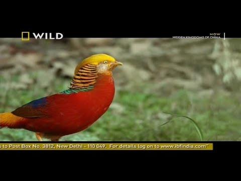 Hidden Kingdoms Of China In Hindi Nat Geo Wild In Hindi