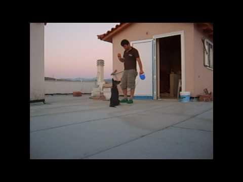 Puppy Training εκπαιδευση κουταβιου (PART 1)