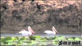 More Number of Foreign Birds in Kanyakumari - Dinamalar Dec 8th 2013 Tamil Video News
