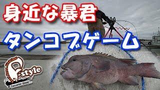 前回、徹夜でアナゴ釣りした後、朝からちまたで流行りつつある『カンダイ(コブダイ)』を狙ってみました。カルティバの虫ヘッドにエサを付けて狙うコブダイをタンコブゲームと呼ぶらしいですw身近で狙える大きな魚と言えば、ルアーフィッシングの王道『シーバスゲーム』がありますが、カンダイの魚影が濃い淡路島では、もっと手軽に狙えるターゲットではないでしょうか…怪魚チックな風貌を身にまとった暴君の引きを是非味わってみて下さい(笑)それと、少しでもイイネ!と思って頂けたら、チャンネル登録も宜しくお願いします!