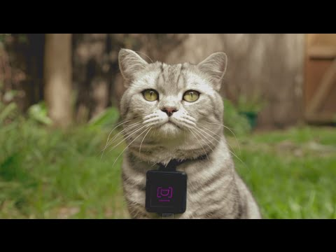 Catstacam Allows Your Cat to Take Instagram