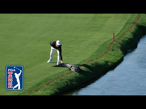 Golfer slaps an alligator  s tail at Arnold