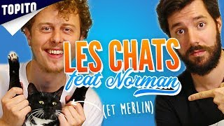 Video Top 8 things to know about cats (feat. Norman) MP3, 3GP, MP4, WEBM, AVI, FLV Agustus 2018