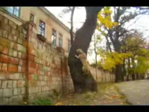 TreT - PARKOUR DOG FROM UKRAINE