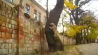 Украинский пёс-паркурщик