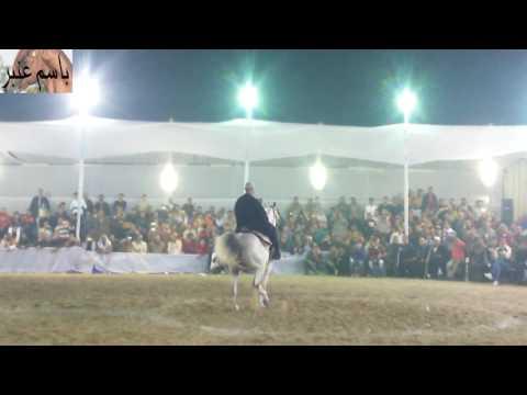 رقص خيول عربية _39 (видео)