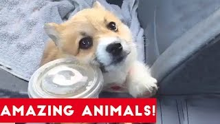 Come and check out this brand new compilation of some of the most amazing animals found all over the world. From a cute little bird that's excited for game of thrones to a curious sloth. Funny Pet Videos has all your favorite animals on earth!Check out this funny animal compilation from Dumb Genius! https://www.youtube.com/watch?v=i1Z-cCEE2t0
