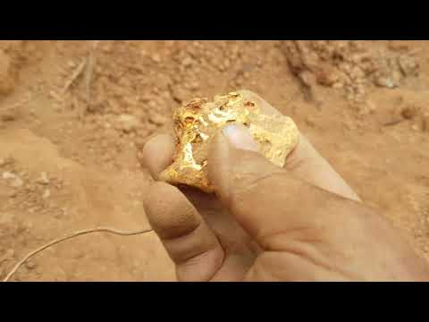 Australian pulls gold nugget out of the dirt.