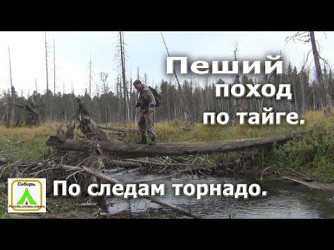 Пеший поход по тайге.По следам торнадо. Избы,тайга,река. (видео)