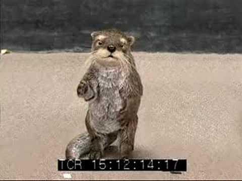 Miller Auditions - Otter