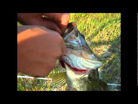 Bass fishing early fall in ponds