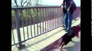Perro está entusiasmado por los trenes