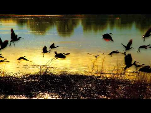 takatakatang - Waltzes always make me think of flight... This song makes me think about the way birds appear to float as they descend on the water, carried by the wind. htt...