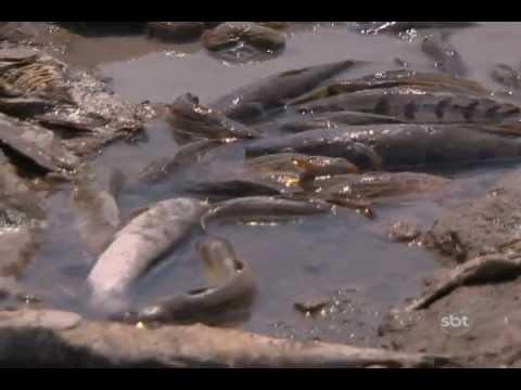 Manaquiri Seca dos rios 2009