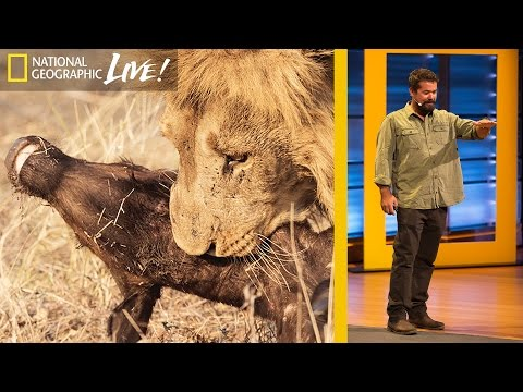 Watch Wild Predators Battle for Survival: Beyond 'Savage Kingdom' (Part 3) | Nat Geo Live