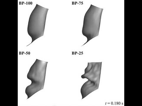 Side view of four bioprosthetic aortic valve implants of different tissue thicknesses (0.386 to 0.0965 mm). The oscillatory flutter motion of the leaflet is observed in the thinner-tissue cases. Credit: Dr. Emily L Johnson.