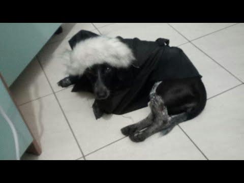 Creare il cartamodello per l'impermeabile per cani