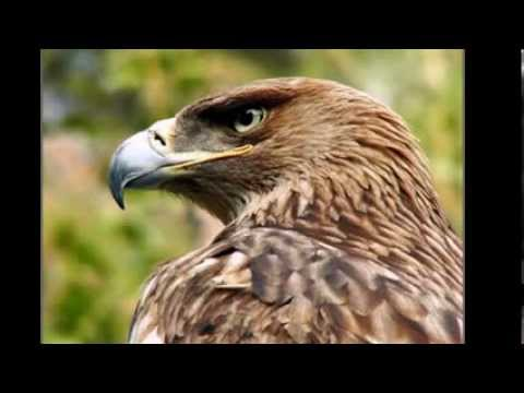 kavkasiuri balada ,,jgufi bani,, (видео)