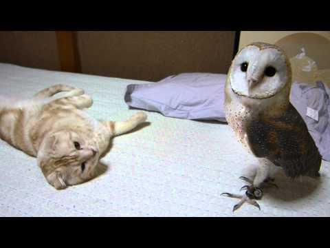 你有看過貓咪和貓頭鷹嬉鬧嗎?