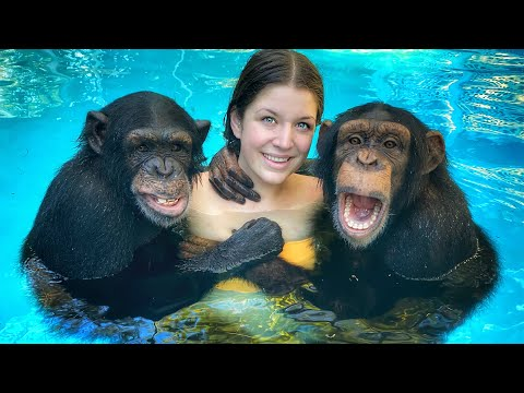 WORLDS ONLY SWIMMING CHIMPANZEES!!! (+6 month old baby monkey debut!)