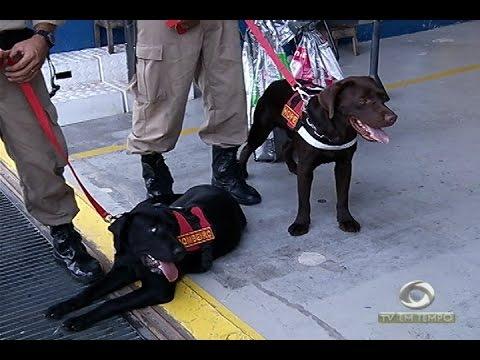 Cães farejadores são enviados a Atalaia do Norte para auxiliar em buscas ao helicóptero