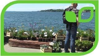 Impressionen Gartentage Lindau 2014