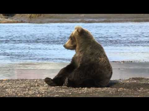 Bear Sunbathes and Rolls Around Beach