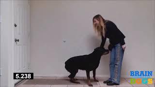 Develops your Dog   Dog Brain training