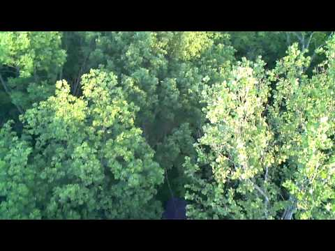 Balloon ride - bird's eye view of the treetops