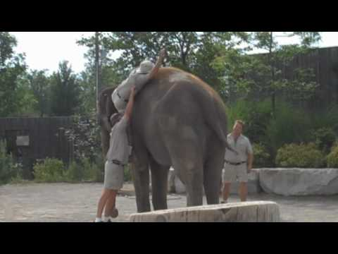 Elephant Ride FAIL (Original)