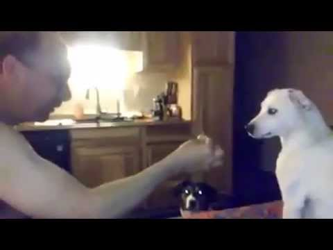 Dog Confused by Magic Trick