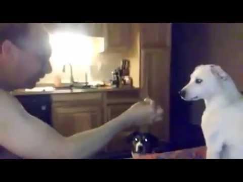cane confuso dalla magia