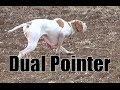 Keklik Avı Pointer Ferma Caccia, Chasse, Caza, Hunting Videos