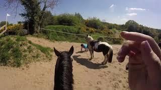 faze tari saritura cu calul