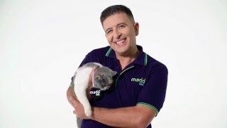 Vince Sorrenti and a cat, amongst other things...