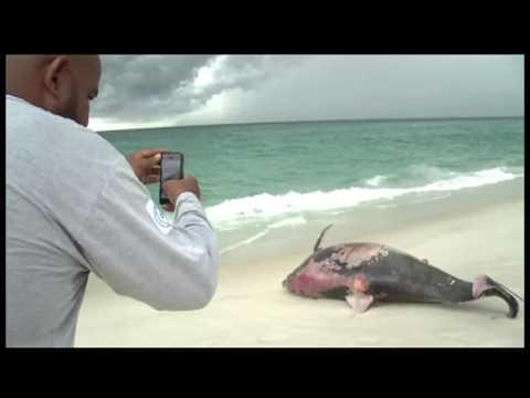 Golfinho é encontrado morto na praia de Itaúna, em Saquarema