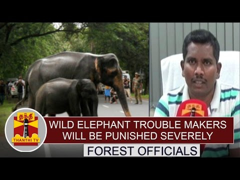 Wild-Elephant-Trouble-Makers-Will-be-Punished-Severely--Forest-Officials-Thanthi-TV