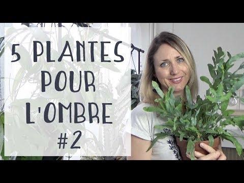 🌿 5 plantes d'intérieur pour une pièce sombre 🌿 #2