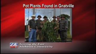 Deputies Seize and Destroy Marijuana Plants