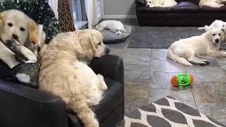 「ナニモノ!?」犬の描かれたブランケットに興味津々のワンちゃんたち(動画)