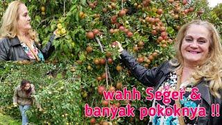Video Buah- buahan untuk musim dingin di Swedia. MP3, 3GP, MP4, WEBM, AVI, FLV September 2018