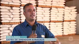 Estiagem atrasa plantio de amendoim em Herculândia