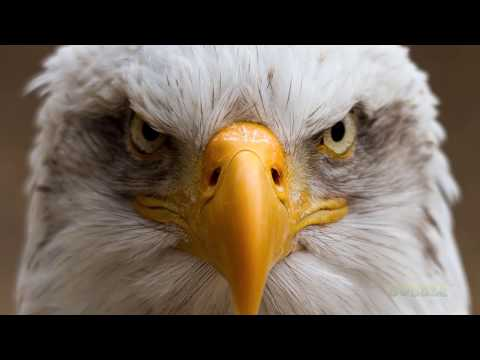 🦅 5 BEST EAGLE ATTACKS CAUGHT ON CAMERA