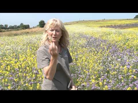 Cotswold Seeds First Hand: Caroline Corsie - Soil Restoration using Green Manure