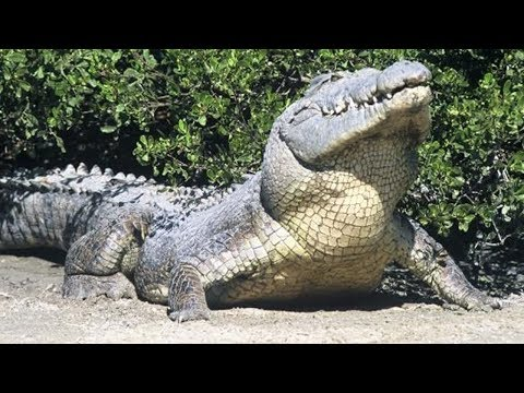 10 Biggest Animals In The World