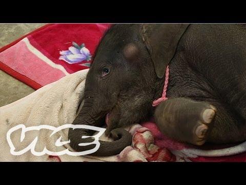 象の赤ちゃん! - Elephant Kingdom