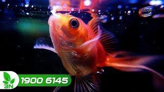 Thủy sản | Xử lý hiện tượng cá nổi đầu, bỏ ăn